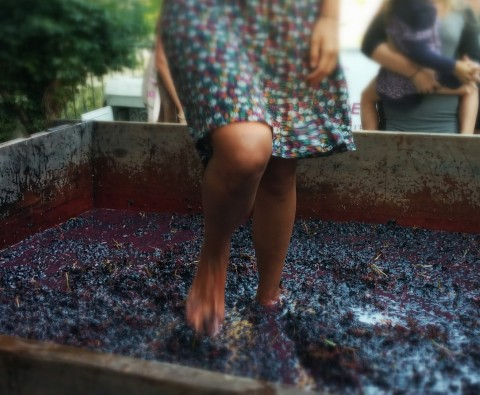 Quando il vino si faceva sull'aia